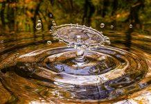 העתיד - טיהור שפכים באגני צמחית מים