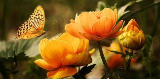 מושגי יסוד בהגנת הצומח בגן הנוי