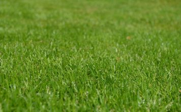 היסודות העיקריים בהזנת המדשאה