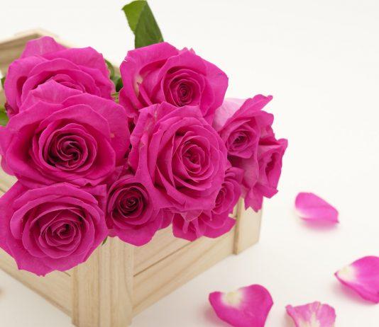 טיפול בזרי פרחים – יש דבר כזה